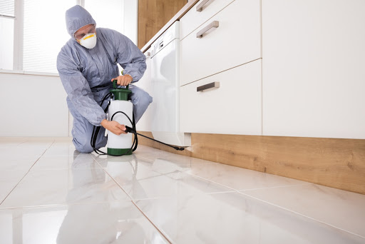 pest control service benefits